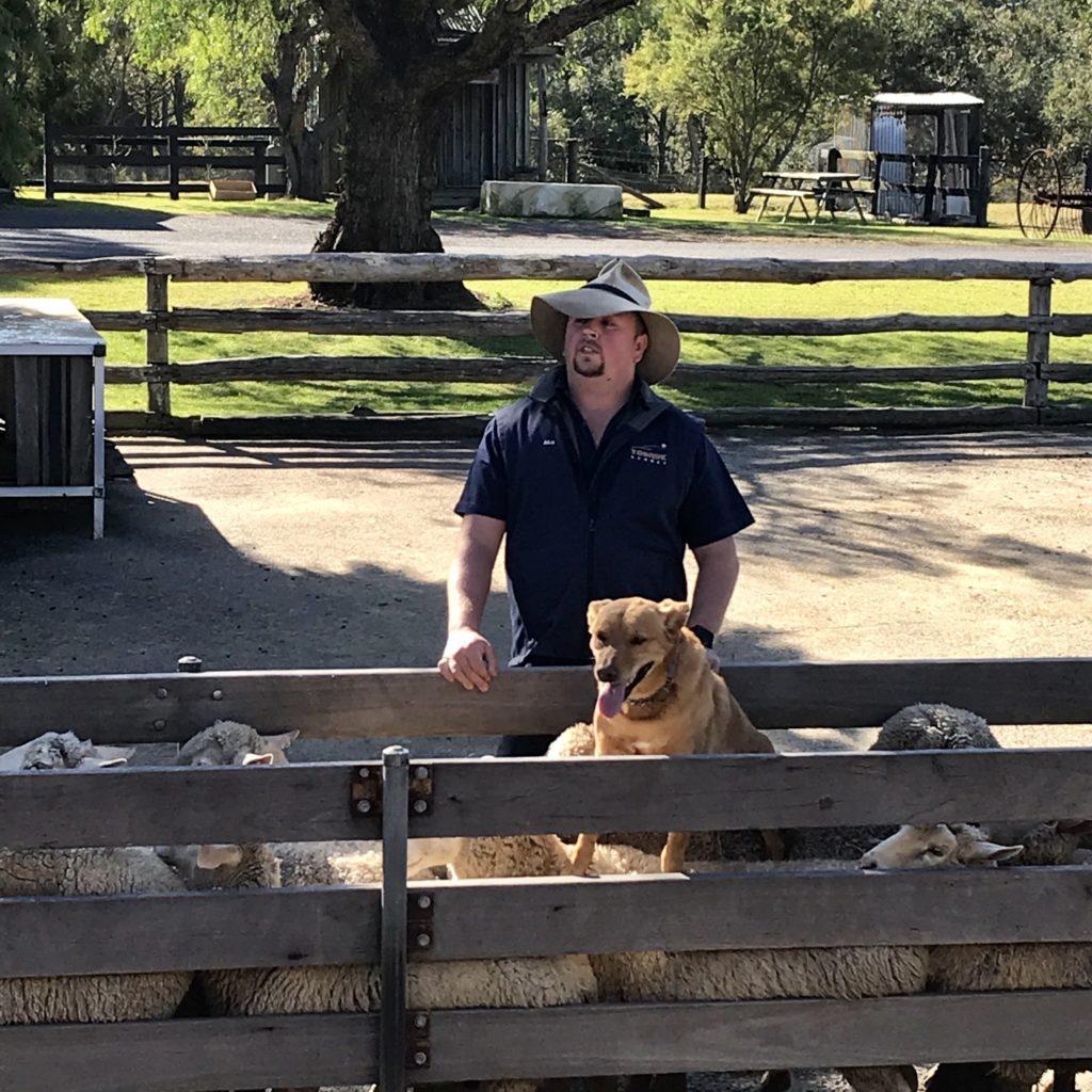 羊の上に乗った犬とその後ろに立っている男性