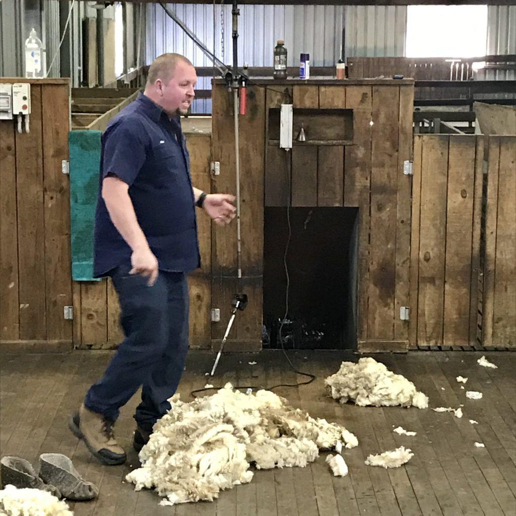 男性と羊の毛