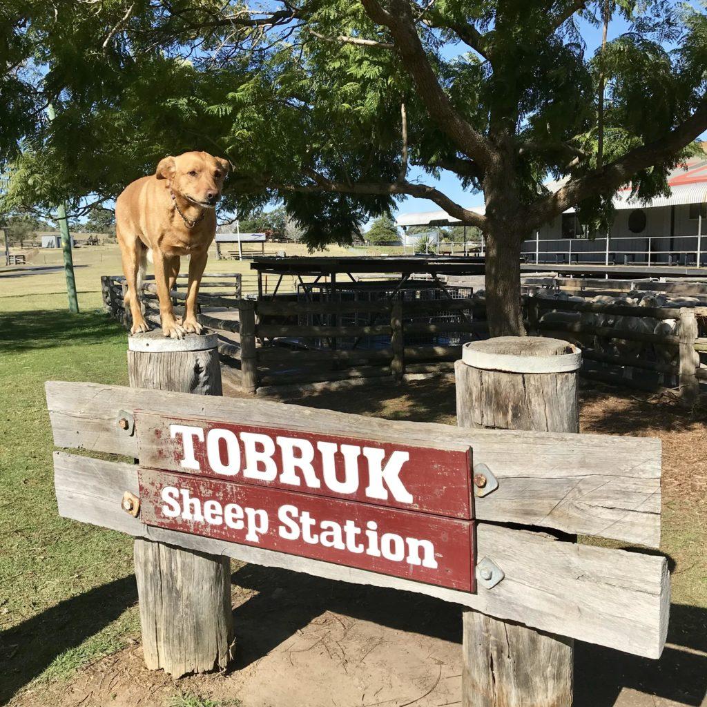 トブロック・シドニーの看板とその上に立つ犬