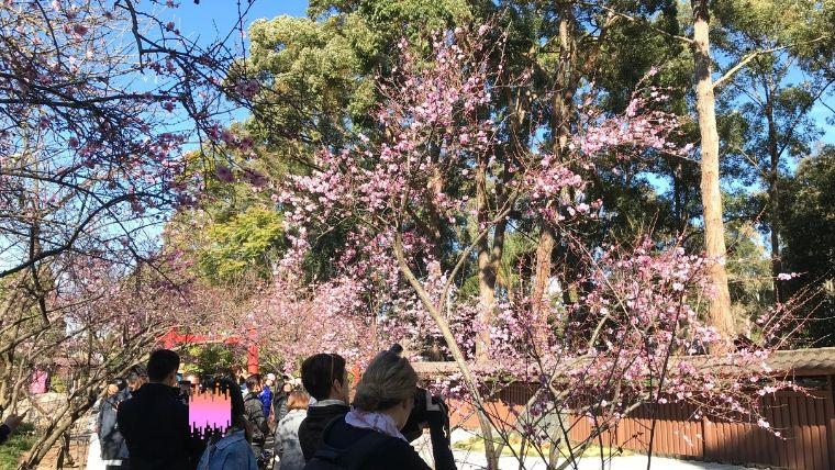 桜を鑑賞している人たち