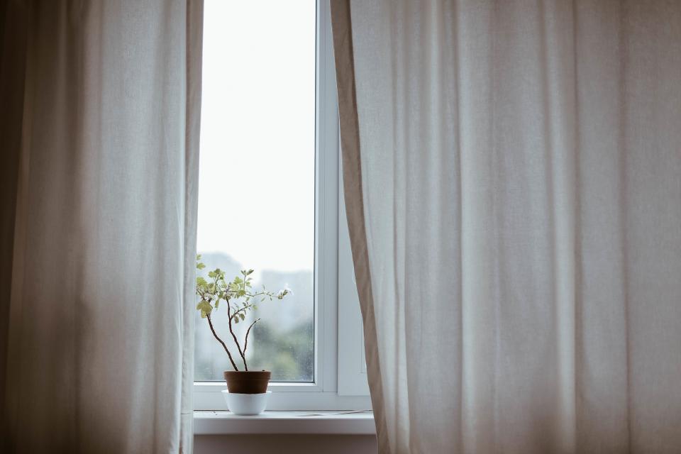 窓辺に置かれた植物