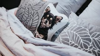 Pillow with a dog on it