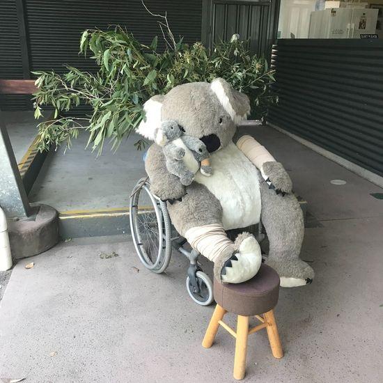 車椅子に乗ったコアラのぬいぐるみ