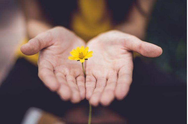黄色い花を差し出している手