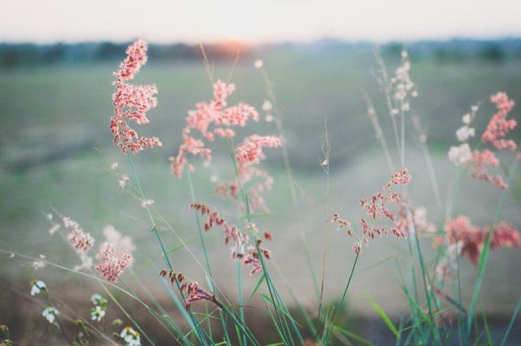 野原に咲くピンクの花