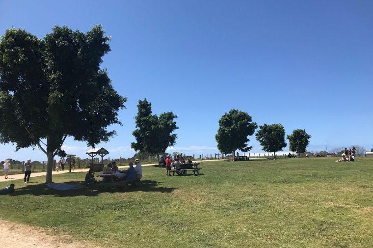 公園の芝生