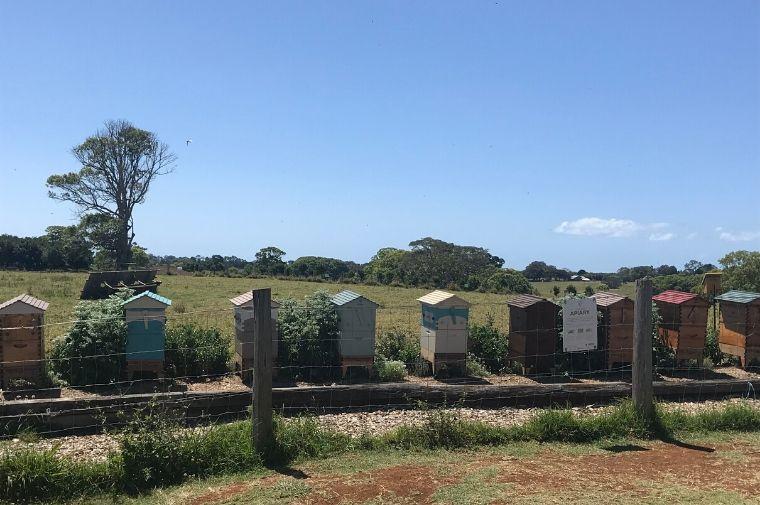 農場に並んでいる蜂の家
