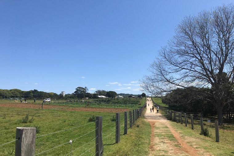 農場の中の一本道