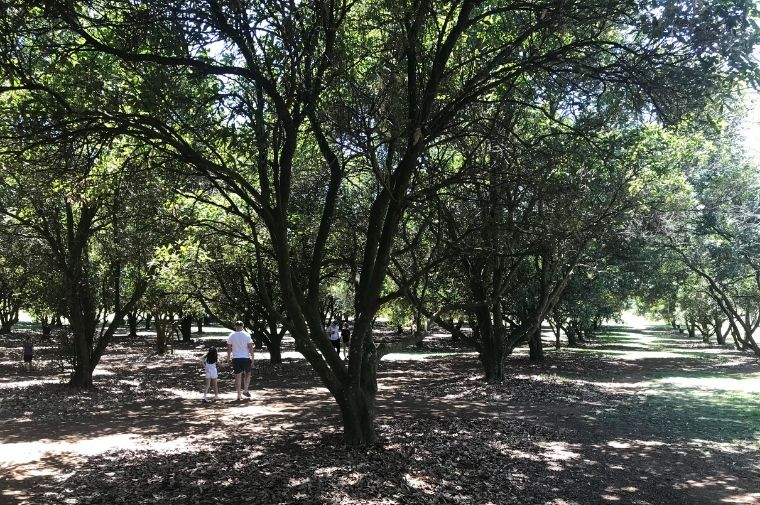 木々の中を歩いている人