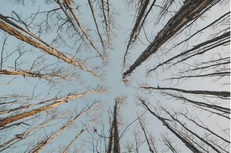 生い茂った木々